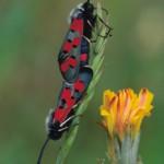 Insectos (David Marcos)